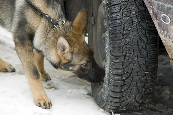 Drug Sniffing Dog arrest? Call a lawyer in Steamboat springs, Craig, Routt and Moffat Counties